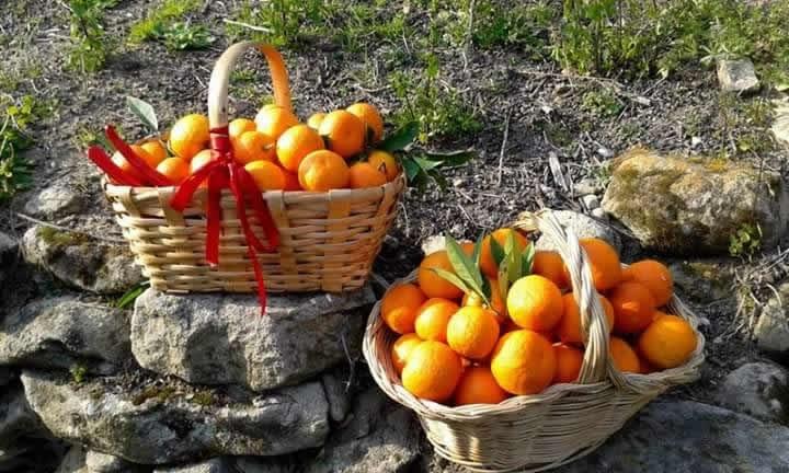 Marmellata di arance amare - gr. 230